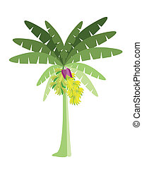 Ecological Concept, A Beautiful Tropical Banana Tree with Bananas and Banana Blossom