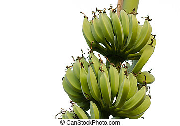 bananas, galore