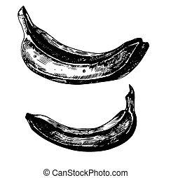 Bananas - Set of 3 hand - drawn bananas on white background