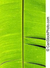 bananowy liść, szczegół