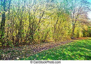 banc, day., parc, paysage., ensoleillé, automne