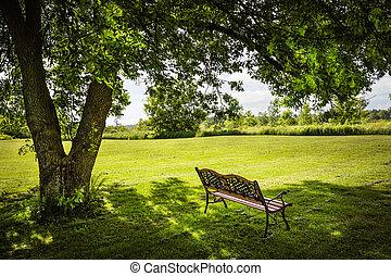 banca de parque, árbol, debajo