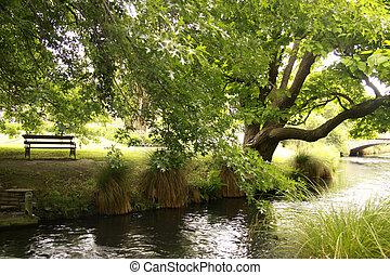 banca de parque, y, roble, al lado de, río