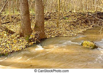 banca fiume, albero