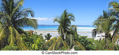 banco de la arena, y, árboles de palma, fisgón, iranja,...