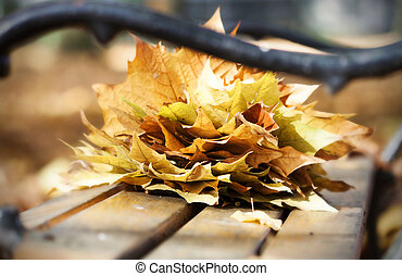 banco de madera, en, otoño, parque