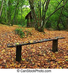 banco, en, bosque de otoño