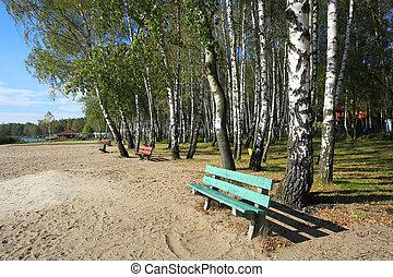 banco, en, el, otoño, parque