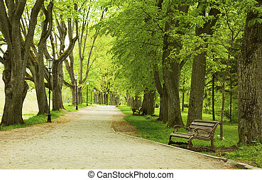 banco, en, el, primavera, parque