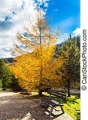 banco, en, otoño, parque, en las montañas