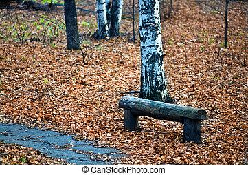 banco, parque, outono