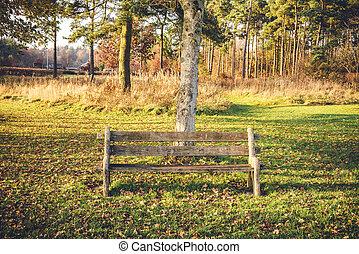 banco, parque, vazio, outono