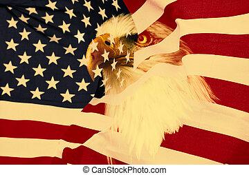bandeira americana, com, águia