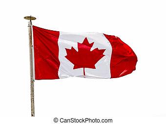 bandeira canadense, vento, sobre, fundo branco, (cutout)