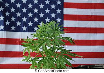 bandeira, cannabis, americano, marijuana
