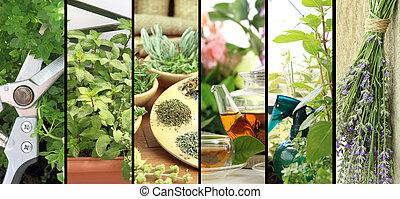 bandeiras, de, ervas frescas, ligado, sacada, jardim