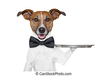 bandeja, cão, serviço