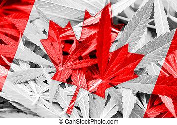 bandera canadá, en, cannabis, fondo., droga, policy.,...