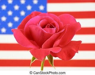 bandera, i, róża