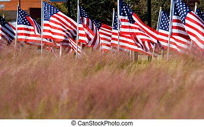 bandiera, giorno, americano, onore, veterani, mostra
