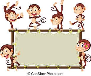 bandiera, scimmia