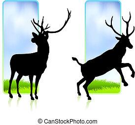bandiere, cervo, natura