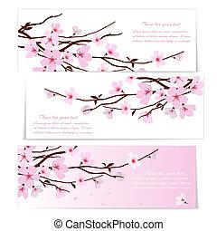 bandiere, fiori, tre, sakura