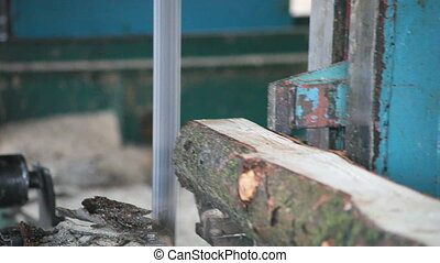 Bandsaw Sawmill - Pine Wood Trimming with Band saw at...