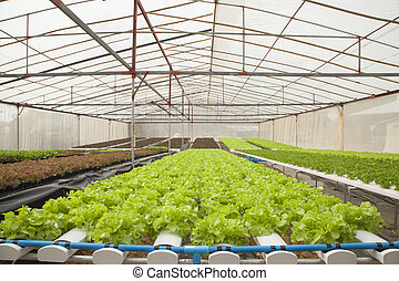 BANGKOK - JAN 4: Hydroponic plant from Hyroponic fastival on Jan 4, 2013 in Bangkok, Thailand. The festival of hydroponic in SE Asia.