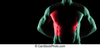 Bangladesh flag on muscled male torso with abs