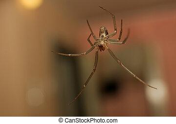 Bangle spider