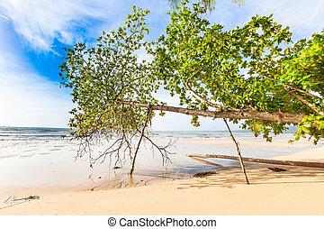 Bangsak beach in blue sky and palm trees