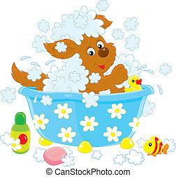 banhar-se, cão