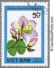banhinia, variegata