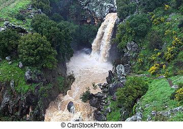 banias, vattenfall, in, den, fjäder, hos, den, golan...