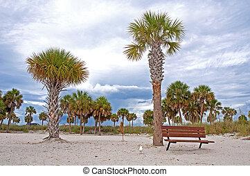 bank, und, palmen, an, a, sandstrand
