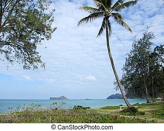 bank, unter, a, kokosnuß- baum, in, grasbedeckt, bereich, von, waimanalo, sandstrand
