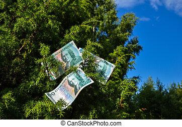 Banknotes in a juniper