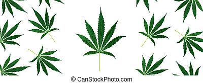 banner., 葉, インド大麻, 光景, marihuana, 緑, バックグラウンド。, 上, 白