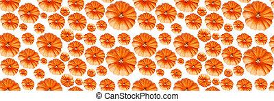 banner., abóboras, pumpkin., seamless, vista, abstratos, experiência., padrão, topo branco, isolado