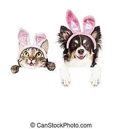Banner, aus, hund, katz, weißes, Ostern, glücklich