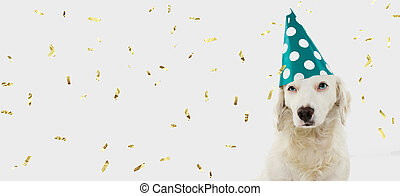 BANNER BIRTHDAY OR CARNIVAL DOG. PUPPY WEARING A GREEN POLKA DOT HAT. ISOLATED ON WHITE BACKGROUND WITH GOLDEN CONFETTI FALLING.