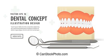 Banner Dentures model and Equipment dental illustration vector on white background. Dental concept.