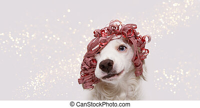 Banner dog celebrating christmas, birthday, new year or carnival party wearing a red ribbon present like wig and making a silly face. Isolated on white background.