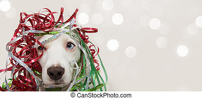 BANNER DOG HAVING A PARTY WITH SERPENTINE STREMERS FOR BIRTHDAY, NEW YEAR, CHRISTMAS, CARNIVAL OR ANNIVERSARY. ISOLATED ON GRAY BACKGROUND.