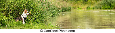 Banner, Dog is sitting on the riverside of a lake, observing and watching at the water