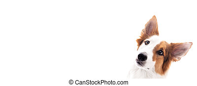 Banner, dog mixed breed looks to the side, isolated against white