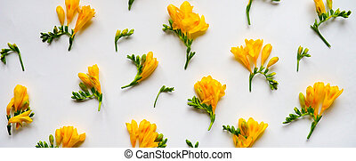 banner for website, Flowers composition. Frame made of dried yellow flowers on white background. Flat lay, top view.