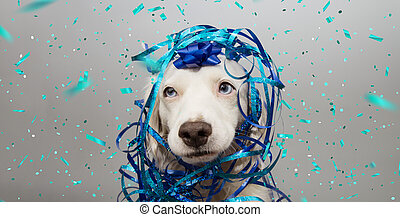 Banner funny dog party. Puppy celebrating birthday, anniversary, carnival or new year with a blue ribbon on head and serpentine. Isolated on gray background.