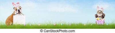 Banner, Hälfte, Ostern, hund, katz